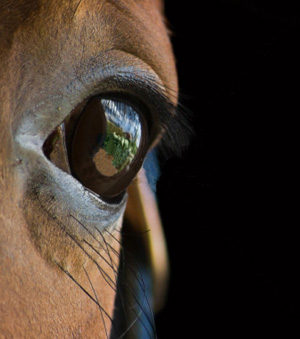 eye-of-a-horse_300px.jpg